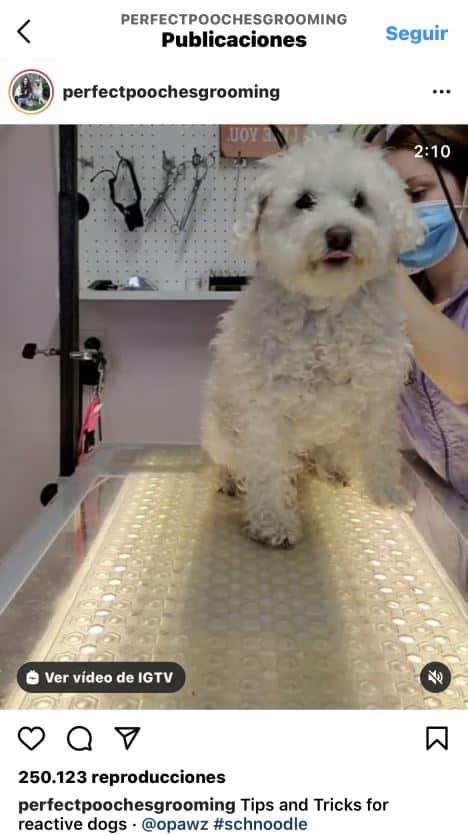 Vídeo en Instagram de lavado de mascotas